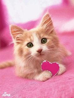 meowy valentine's ngày