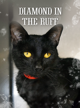 A Book Pertaining To Black gatos