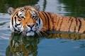 A Cool Dip In The Pool - cherl12345-tamara photo