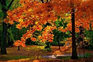 Autumn In Cleveland