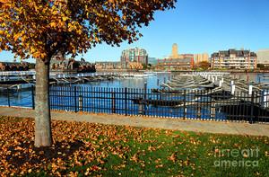 Autumn In Buffalo