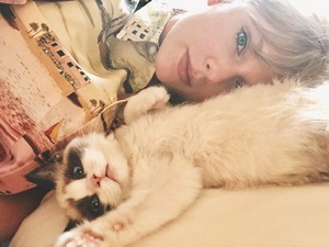 BENJAMIN BUTTON MALE CATS KITTENS LOVE TAYLOR SWIFT