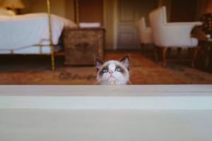 BENJAMIN BUTTON MALE mèo mèo con