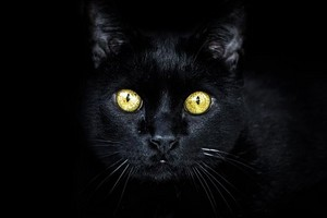 Beautiful. Black Cat