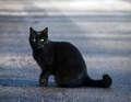 Beautiful. Black Cat