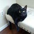 Beautiful Black Cat - yorkshire_rose photo