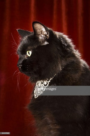 Black Cat Wearing A Diamond collana