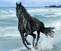 Black Horse  - cherl12345-tamara fan art