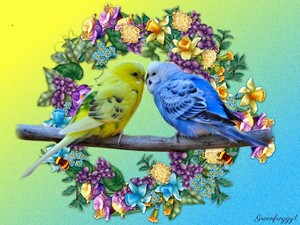Budgies In Love