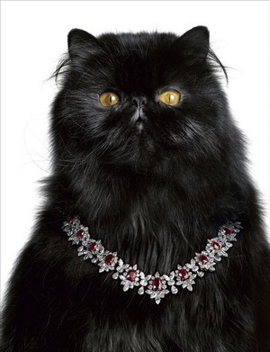 Cat Wearing A Ruby And Diamond colar