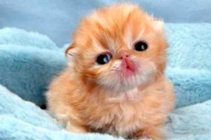 Cute Tiere