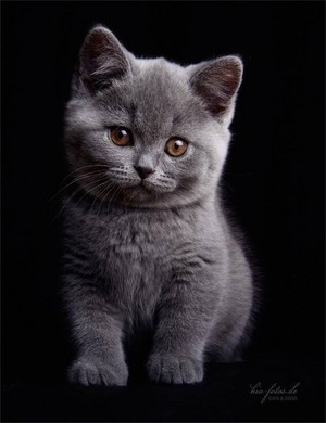 Cutle Little Kitten