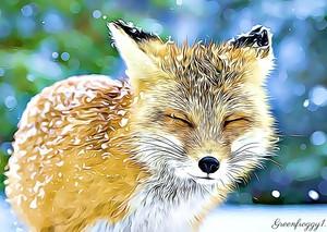 Foxes Closeup Beautiful Snow Cute