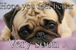 Get Well Soon Cute Pug Card