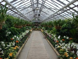 Inside Rockefeller Park Greenhouse