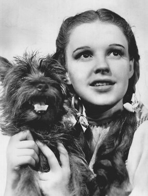 Judy Garland as Dorothy and Terry as Toto