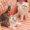 MEREDITH CATS OLIVIA CATS - cats photo