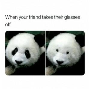 Panda meme time!! 💖🐼