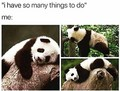 Panda meme time!! 💖🐼 - karoii-chan photo