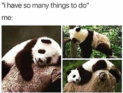 랜덤 바탕화면 called Panda meme time!! 💖🐼