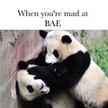 Panda meme time!! 💖🐼 - random photo