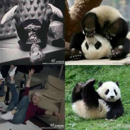 बिना सोचे समझे वॉलपेपर called Panda meme time!! 💖🐼