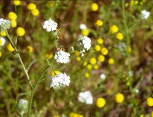 ポップコーン お花