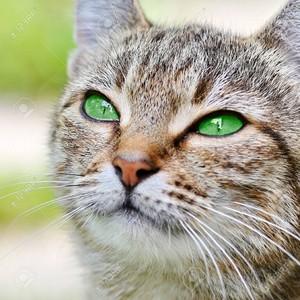 Pretty Green Eyes