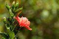 Spring Flower - gardening photo