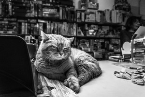 Take Your Cat To Work jour