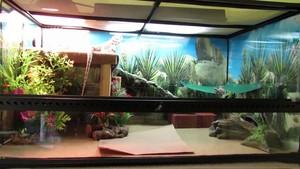 Tank setups
