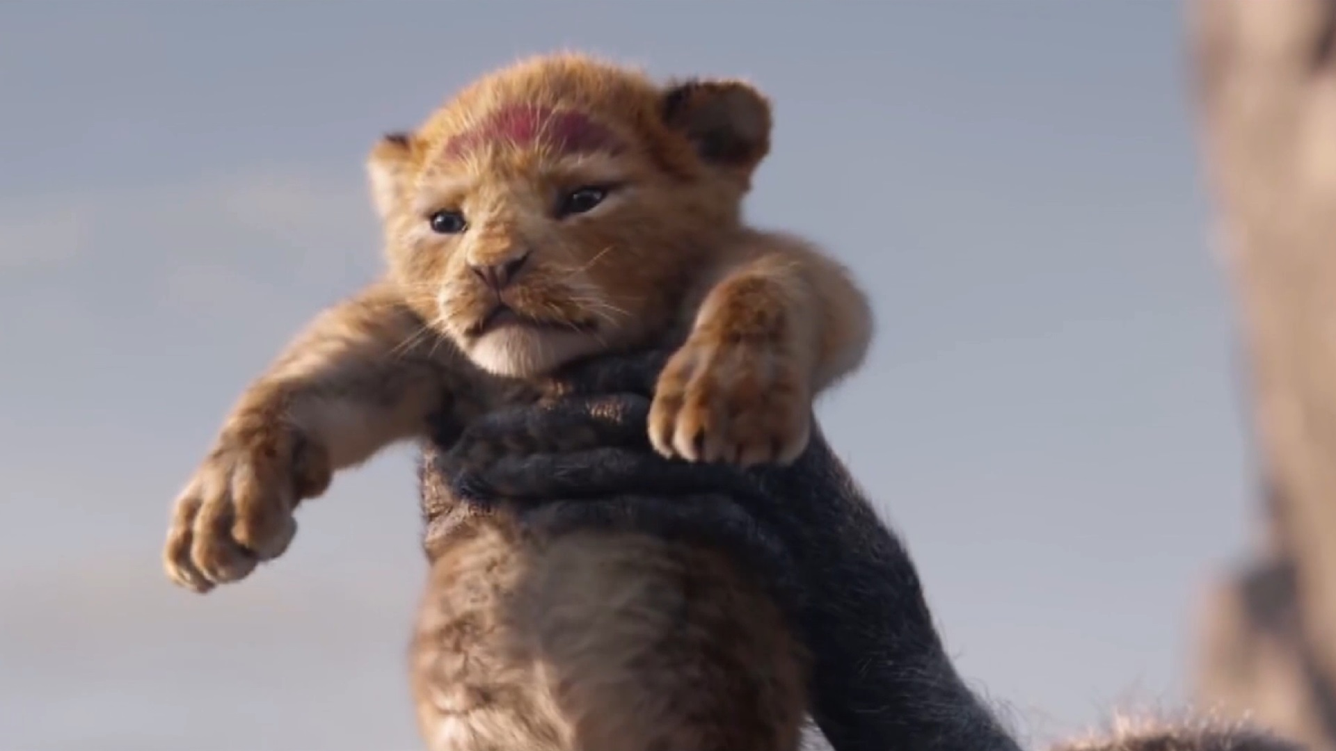 The Lion King 2019 The Lion King 2019 Wallpaper 42723127