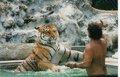Tiger Training - cherl12345-tamara photo