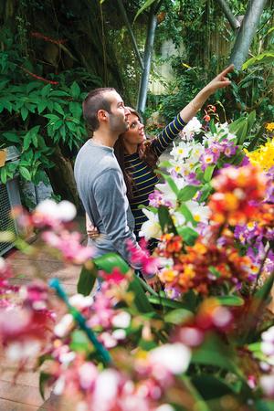 Touring The Orchid Garden Cleveland Botanical Garden
