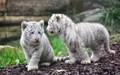 animals - laura1233214 photo