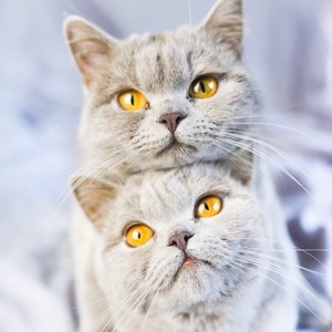 beautiful cats🐾🐱