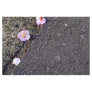 beautiful फूल