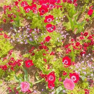 beautiful fiori