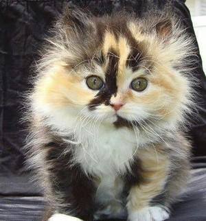 beautiful kitten for my cutie Mira/ᐠ。ꞈ。ᐟ✿\