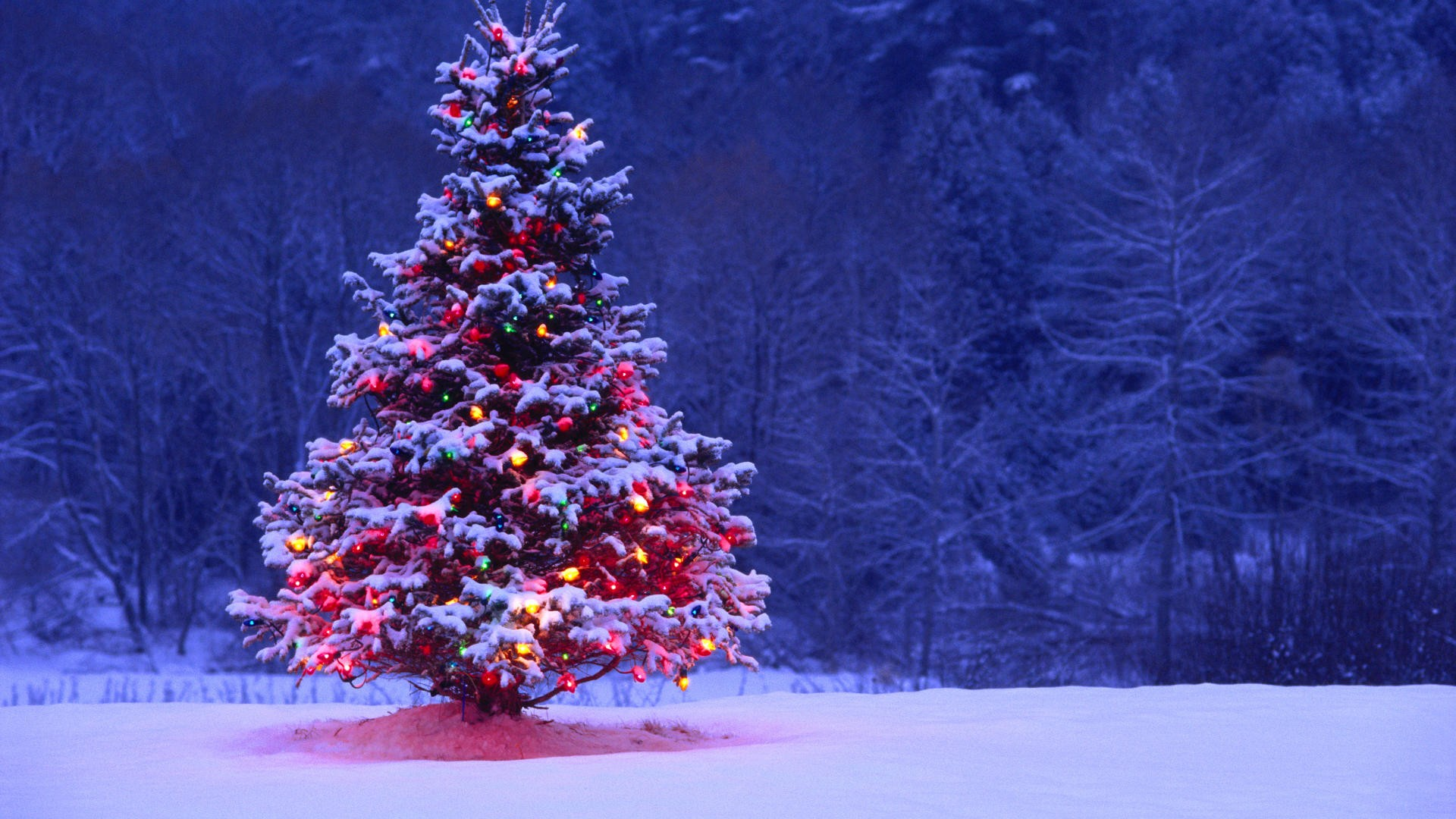 Christmas images christmas tree hd wallpapers best desktop images widescreen HD wallpaper and background photos