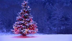 natal pohon hd wallpaper best desktop gambar widescreen