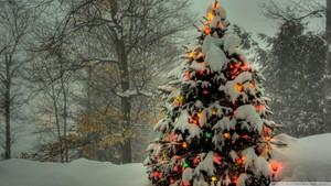 christmas arbre outside fond d'écran 1920x1080