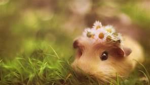 cute 动物