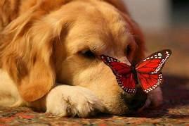 cuties and Schmetterlinge