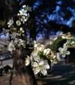 spring vibes🌹💖🌸 - spring photo