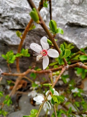 spring vibes🌹💖🌸