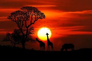 mga hayop at Sunrise