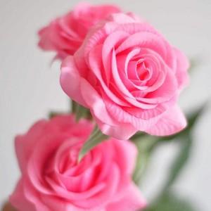Beautiful mga rosas