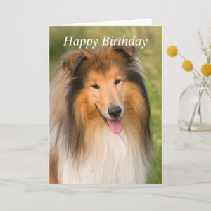 سے collie, کوللی Birthday Card