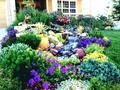 Front Flower Bed With Rocks - cherl12345-tamara photo